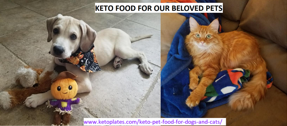 Pet food for keto animals